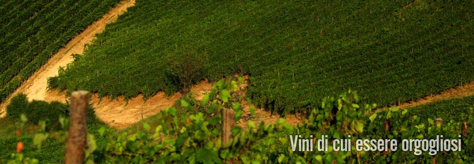 azienda vinicola fratelli piacentini | i nostri vigneti