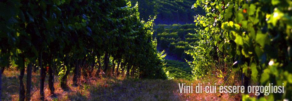 azienda vinicola fratelli piacentini | vista delle viti
